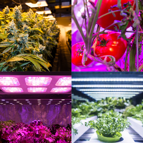 Register for Horticulture Lighting Conference 2019 - October 31, 2019 | Denver, CO